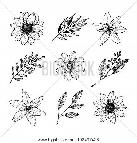 Vector Illustrations - Floral Set (flowers, Leaves And Branches). Hand Drawn Design Elements In Sket