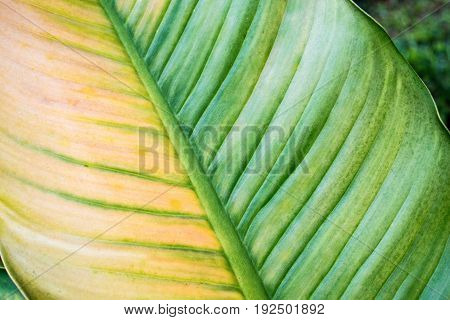 Texture of tropical leaf natural, beauty, spa, summer