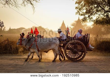 An Ox Cart Running On Dusty Road At Sunset