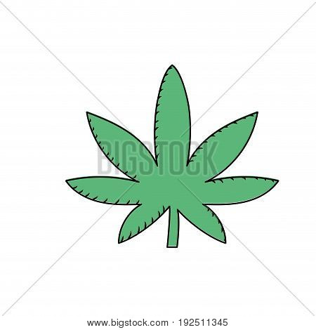 marijuana plant with leaves and medical herb vector illustration