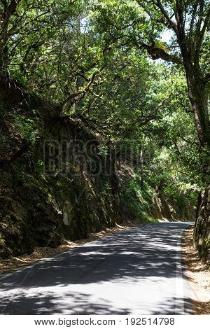 a road in forest in summer day