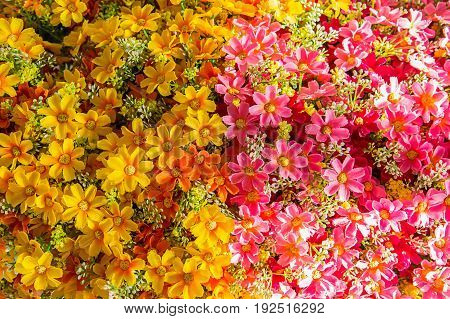 Floral colored background. Many flowers arranged in the substrate. The concept of color structure flowers. Beautiful flowers background for wedding scene