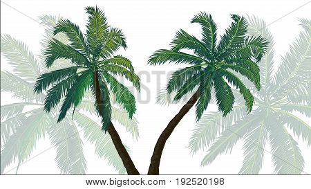 Background palms. Two palm trees in the foreground. Two palm trees blurred in the background.