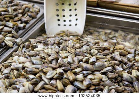 Clams - Class: Bivalvia - Seafood in Fresh Food Market - Catania Italy