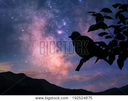 Silhouette of bird on a branch against the Milky Way and morning sky