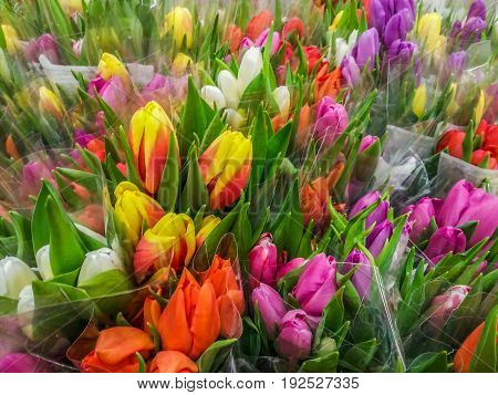 fresh  bunches of flowers of Colorful tulips at market stall before holiday