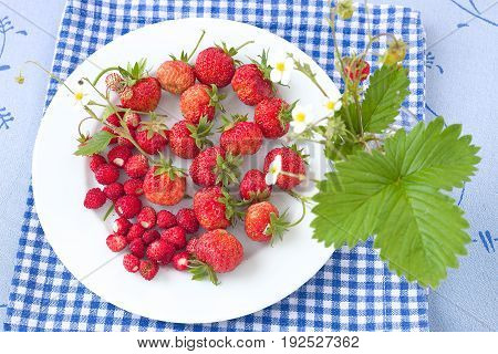 Fresh strawberries and wild strawberries on a white plate.