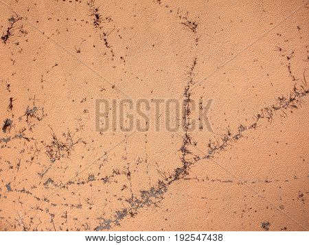 Image of cement background with dried plant texture