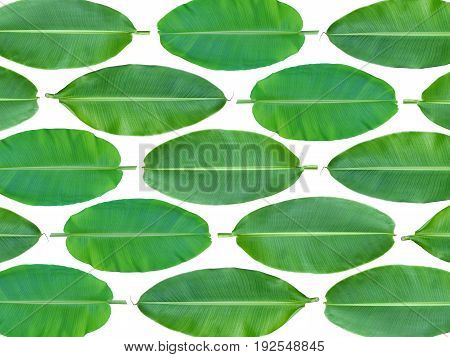 Image of fresh whole banana leaf background
