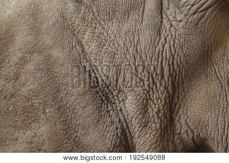 Close up of rhino skin background, Abstract Background