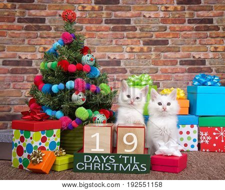 Two fluffy white kittens sitting on brown carpet next to small christmas tree with yarn ball and toy mice decorations. Colorful presents with bows and countdown to Xmas blocks. 19 days til.