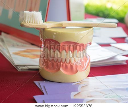 Denture or dental model gum and teach brushing of tooth pattern