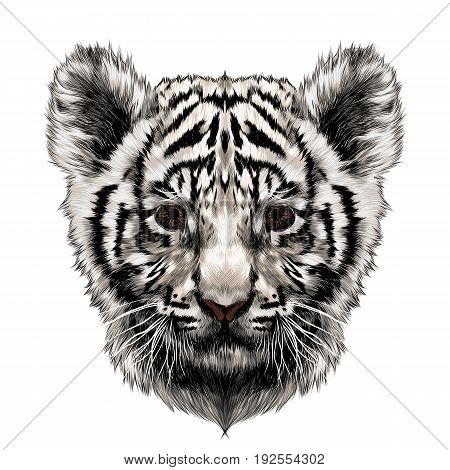 white tiger cub head sketch vector graphics color picture