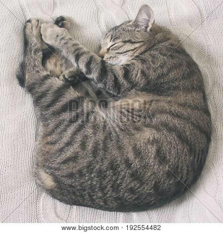 A cozy sleeping cat curled up in a ball