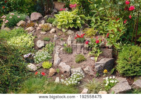 Decorative blooming alpine slide. Landscape design. Home flower garden with fresh plants and stones. Summer blooming flowerbed. Gardening and landscaping concept
