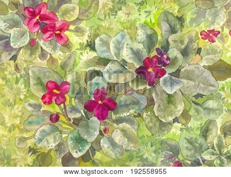 Watercolor purple violets. Burgundy flowers on the bed. View from above. Green wallpaper or poster