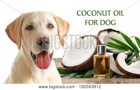 Pet care concept. Puppy and bottle of coconut oil with nuts on white background