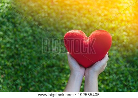 Red soft heart small pillow shape in asian female hands for Valentines day concept on green grass background with soft yellow sunlight and copy space selective focus