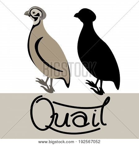 quail  vector illustration style Flat black silhouette