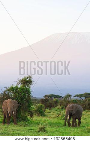 View of Kilimanjaro Mountain from Kenya. Africa