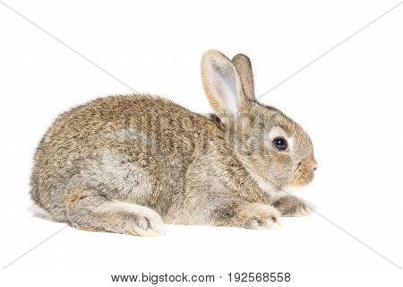 Rabbit rabbit on a white background Russia Tambov Summer (June)