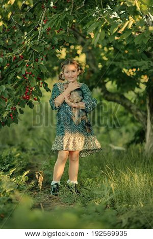 in cherry orchard playing with dog cute little girl