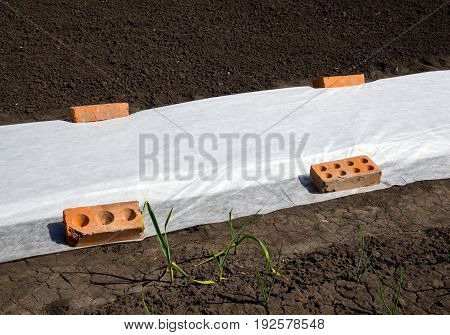 The garden bed covered with a white covering materials for protection from the cold