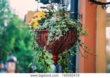 Flower pot with yellow flowers hang on the street. Focus on the foreground