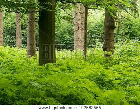 Fern and various trees in the forest in springtime