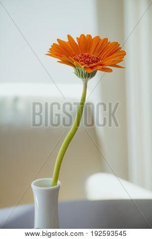 Orange Gerbera Flower In White Vase On White Background