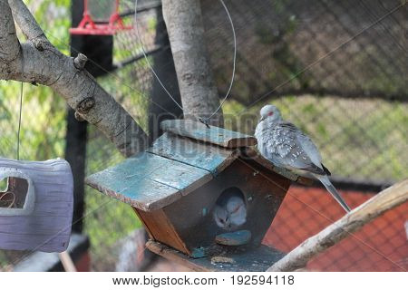 Birds in the cage with the nature