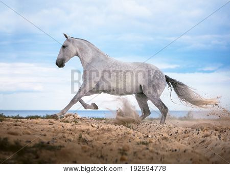 White horse galloping on the beach on the sea and clougs background