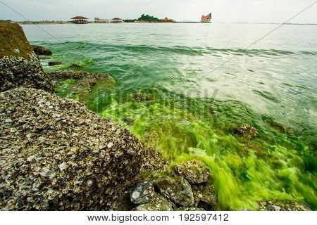 Plankton bloom,Algae Bloom change A sea to be green.