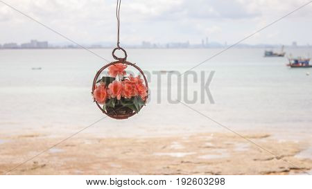 The flower basket hanging.Spring flower. Summer flower