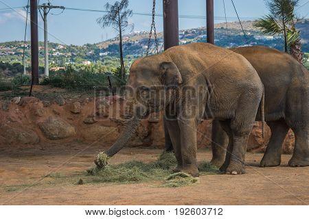 Two Elephants Walking On The Lawn, Greece