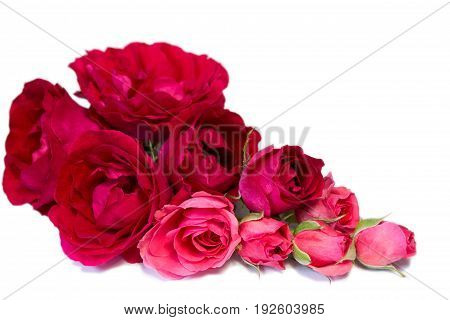 Beautiful bouquet of red rozes on the white background