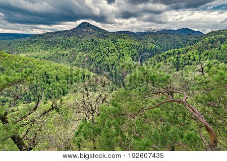 Mountain forest at spring cloudy day time. Caucasus. Russia.