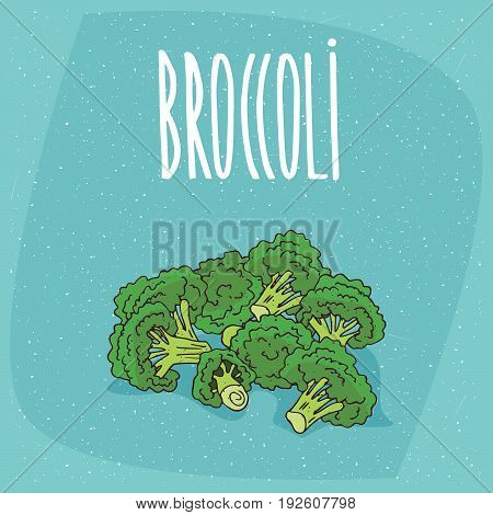 Isolated Ripe Vegetables Broccoli Stalks