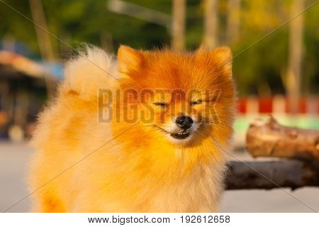 Dog playing outside smiles with her owner