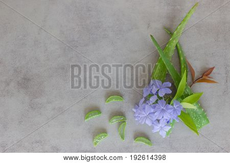 Aloe sliced and purple flower on a cement background