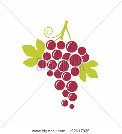 Fresh grape with leaves on white background. Red grape