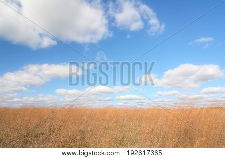 A beautiful field of wheat with a blue cloud filled sky.