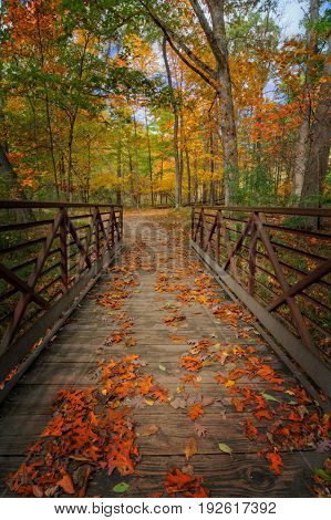 A look down a rustic foot bridge at Oak Openings Preserve Metropark in Toledo Ohio that's covered with autumn leaves.