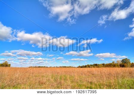 A beautiful field of tall grass with a blue cloud filled sky.