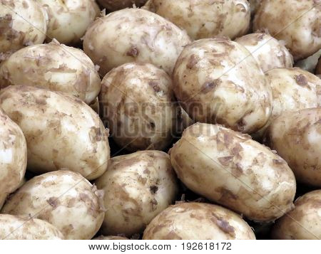 White potatoes in Markham Canada June 24 2017