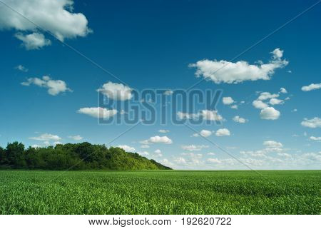 Russian space. The green fields of the Saratov region under the blue sky and beautiful clouds.