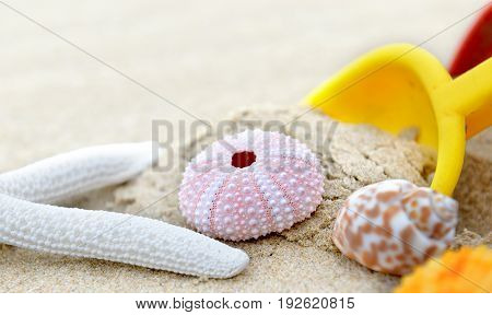 Mixing Shellfishes On The Beach