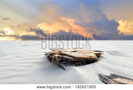 Beach Sand And The Bury Log