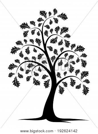 vector oak tree isolated on white background