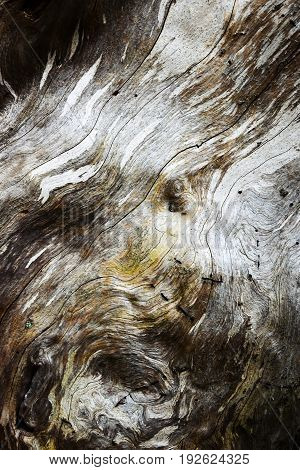 abstract background or texture Detail of the old wood with rot